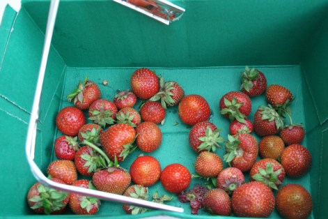 handpicked strawberries