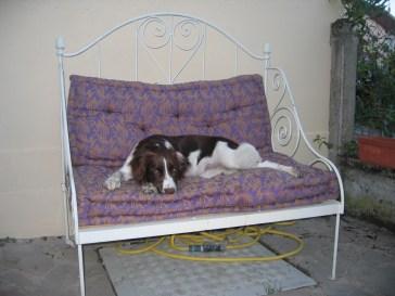 Saartje resting