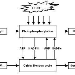 Diagram With Inputs And Outputs Of Photosynthesis Process 30a Rv Plug Wiring The Second Law Life Dinucleotide