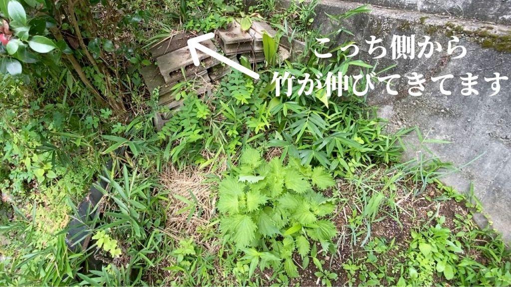 野菜の発育不調の原因