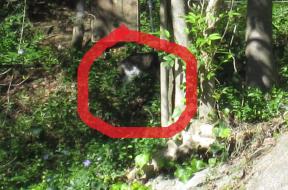 DL cat2