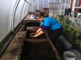 Sifting compost for our on-farm potting mix