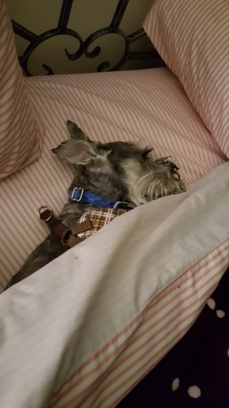 pooker-under-covers