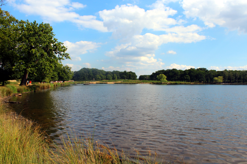lake in Richmond Park