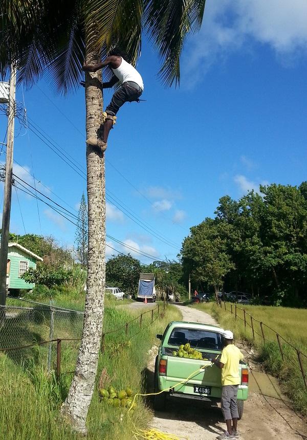 Coconut Water - the Healthy Roadside Drink