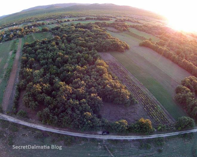 Pristeg forest from the air