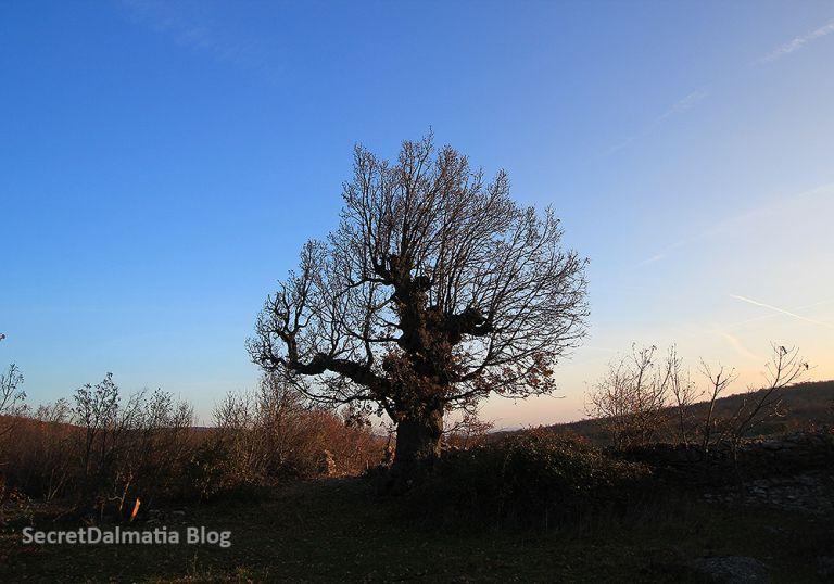 winterdaysinbukovica202