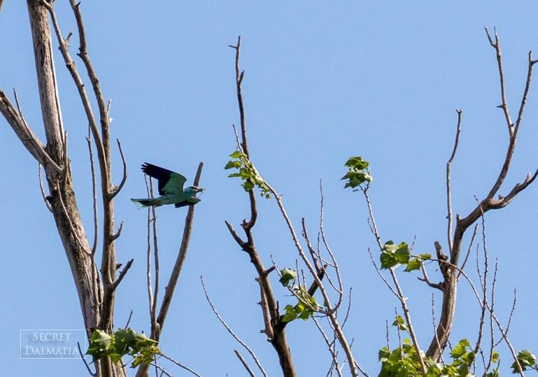 birds008