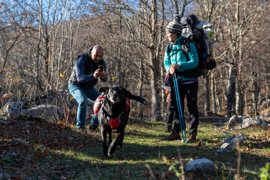 Dog and hikers on Velebit