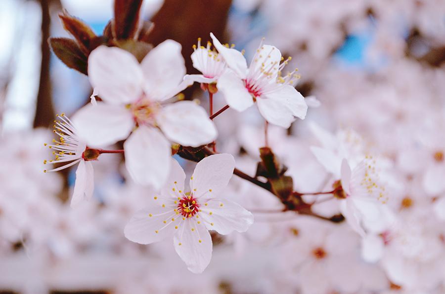 floare primavara spring flower close-up
