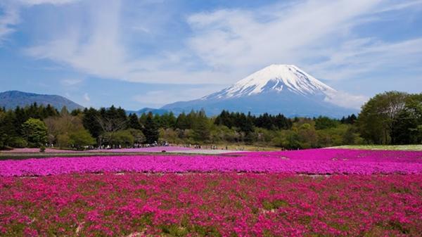 sursa: http://www.japanfinds.com/mount-fuji/