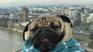 doug-pug-london