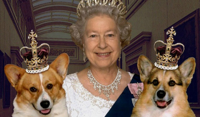 queen-and-corgis