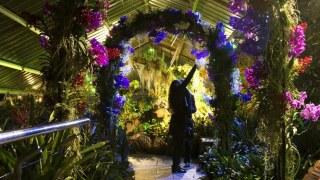 kew-garden-feature