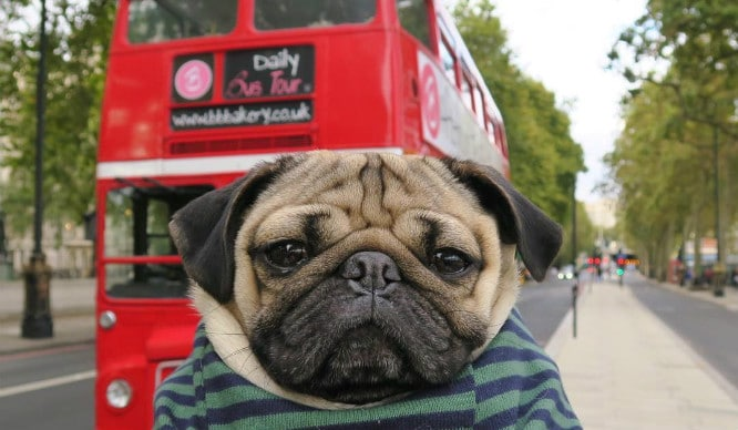 london-bus-tour-dogs