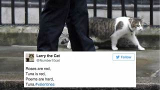 valentines-wishes-london-larry-the-cat-twitter-funny