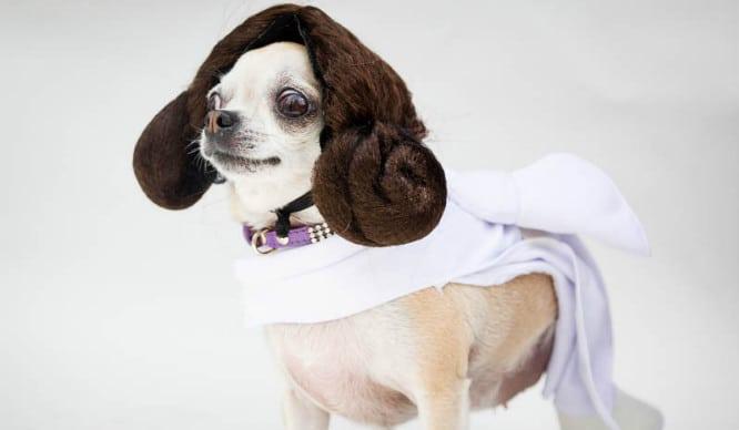 princess-leia-sci-fi-film-fest