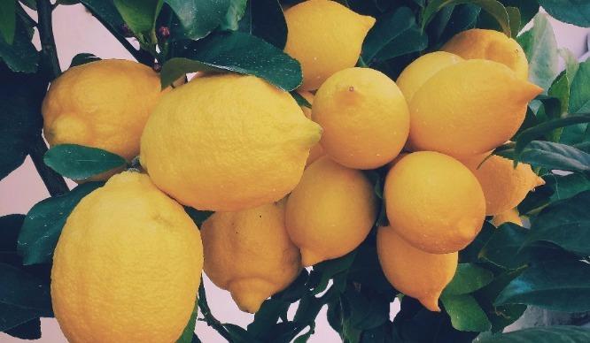 lemon-feature