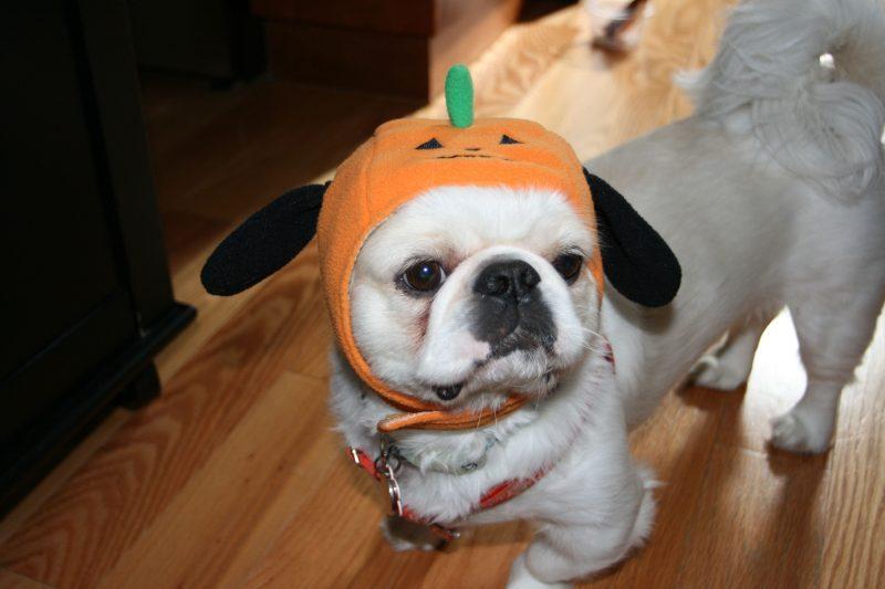 hate-halloween-grumpy