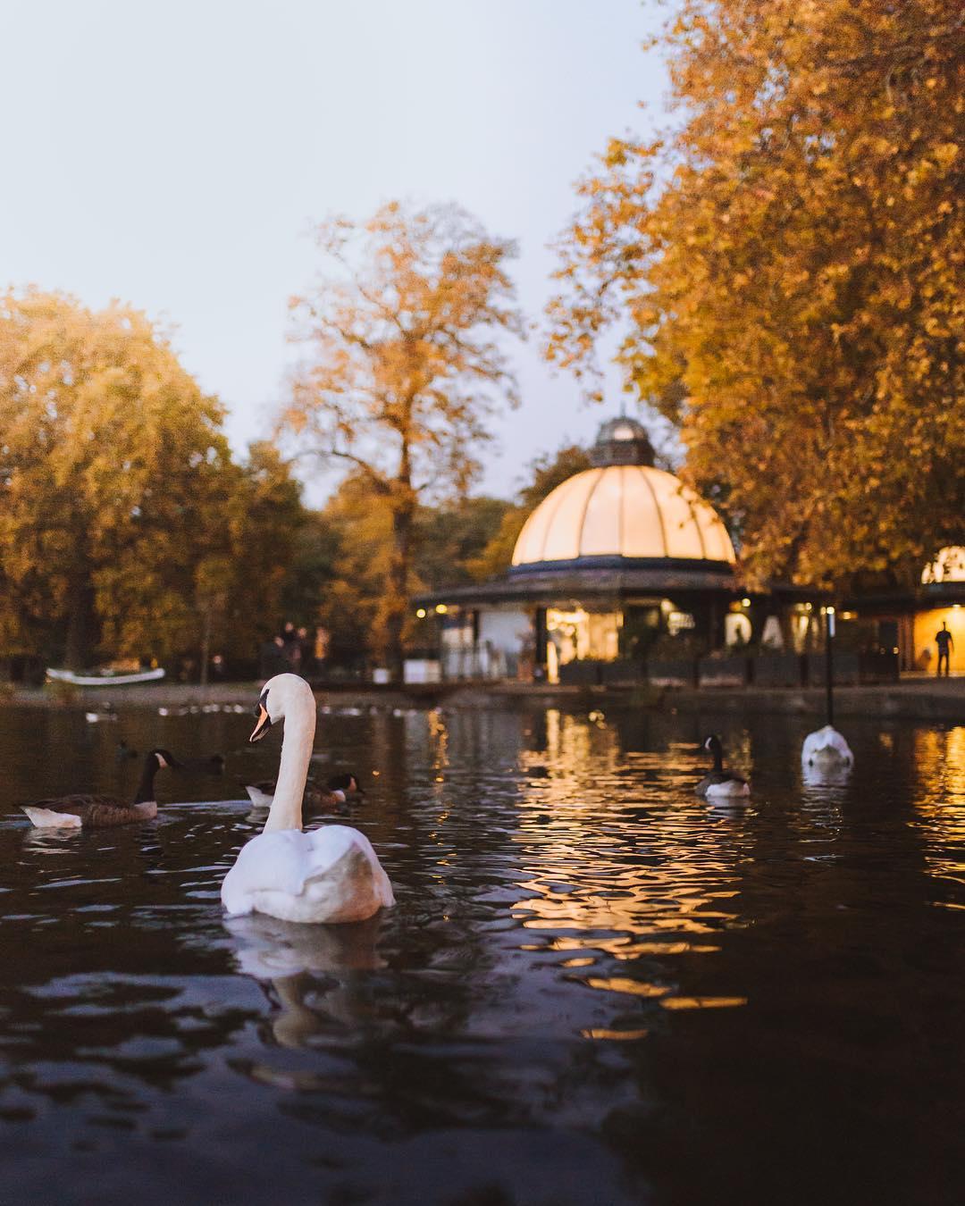 Victoria Park London photo - autumn