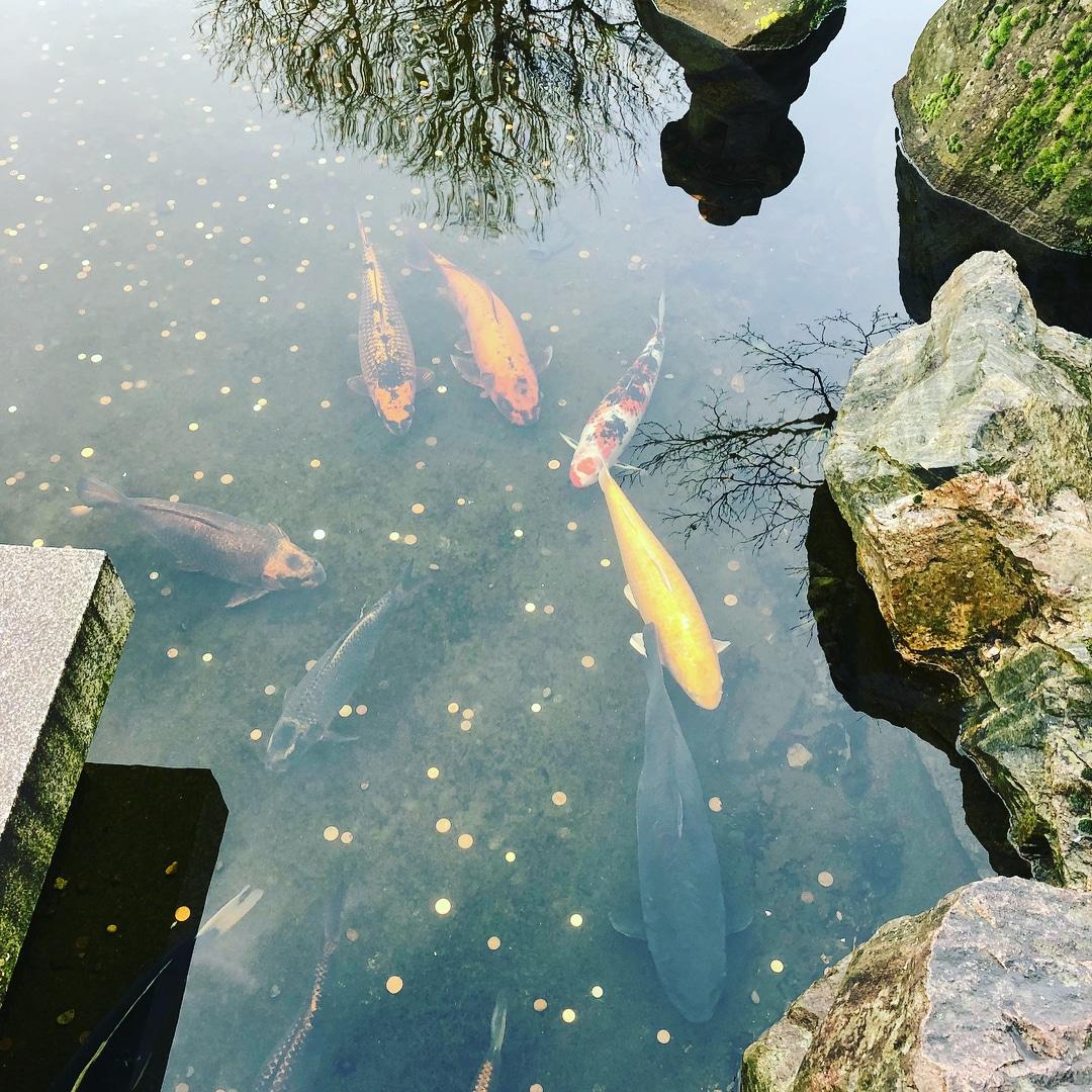 kyoto-garden-coi