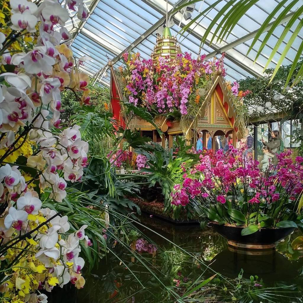 orchids-14