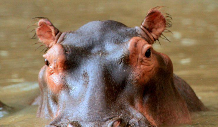 hippos-london-thames