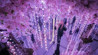 cherry-blossom-london-exhibition