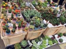 Little cactus plants for sale
