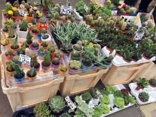 Little cactus plants for sale
