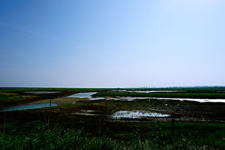 Rye Harbour Nature Reserve - Rye East Sussex