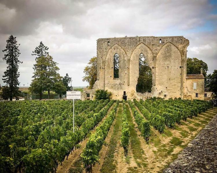 Vineyards of the Bordeaux wine region - Reasons to love France