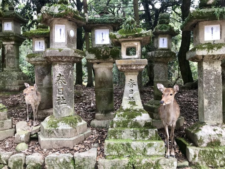 Nara deers - Each of the best cities to visit in Japan boasts its own vibe, unique culture and identity, from historical to arty (and everything in between), here are our selection of places to see in Japan.