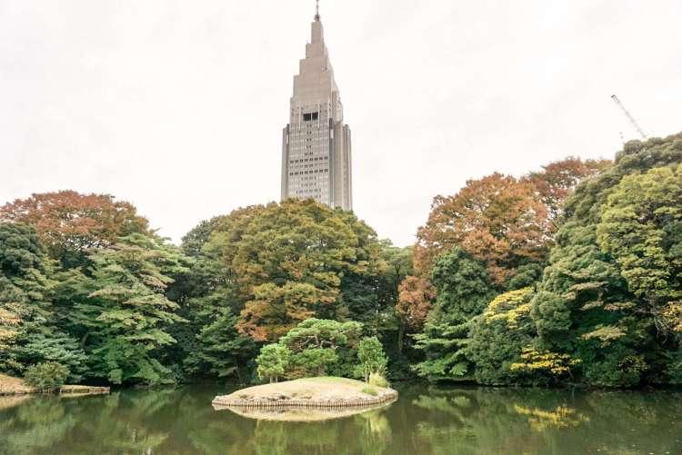 13 reasons to visit Japan in autumn: Visit Shinjuku Gyoen garden