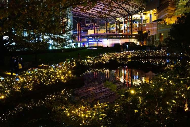 13 reasons to visit Japan in Autumn - Christmas illuminations