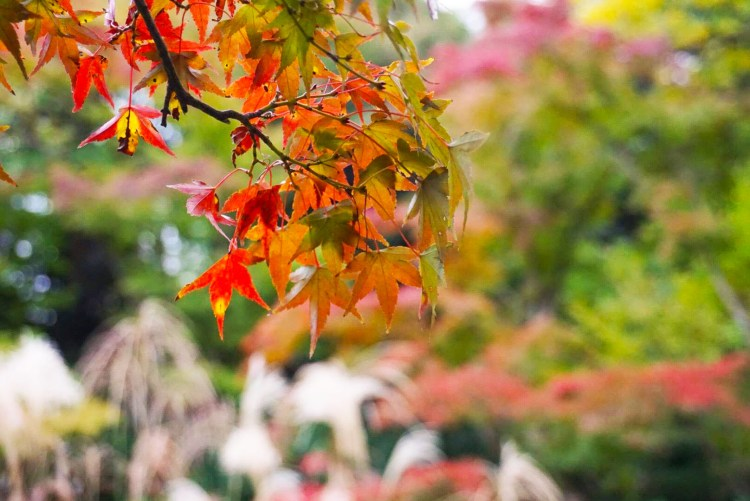 13 reasons to visit Japan in autumn: autumn leaves