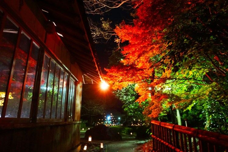 13 reasons to visit Japan in autumn: night garden viewing