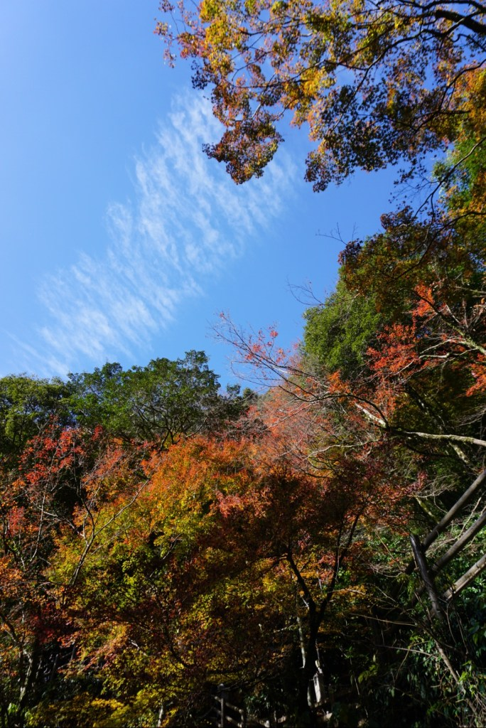 13 reasons to visit Japan in Autumn: coloured leaves