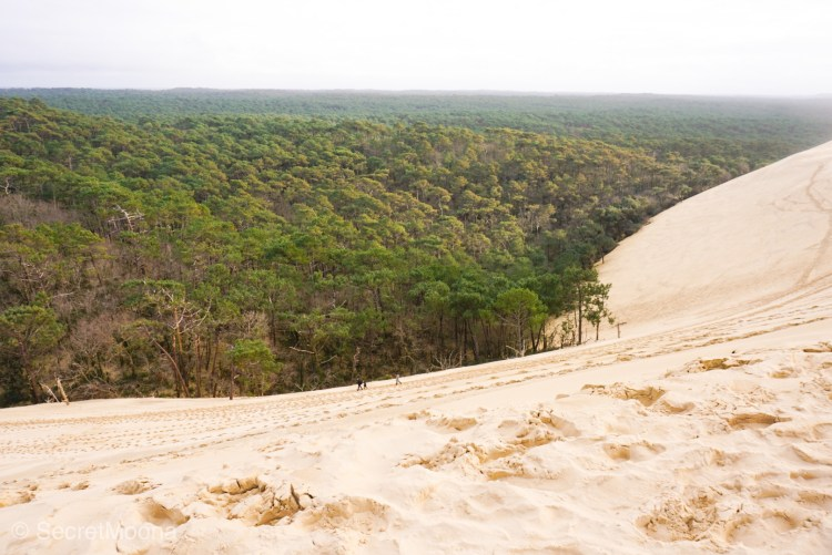 Dune du Pilat with the forest as a backdrop