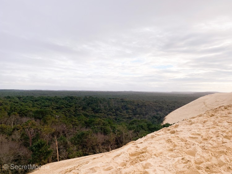 Top of Dune du Pilat with the forest as a backdrop