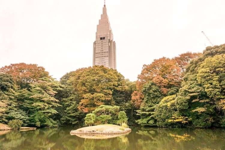 Autumn leaves surrounding skyscrapers in Shinjuku Gyoen National Garden