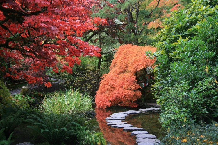 Discover the most beautiful gardens in Tokyo to visit this autumn. Explore the dazzling displays of colour in stunning gardens and parks. #Tokyo #garden #parks #Japan