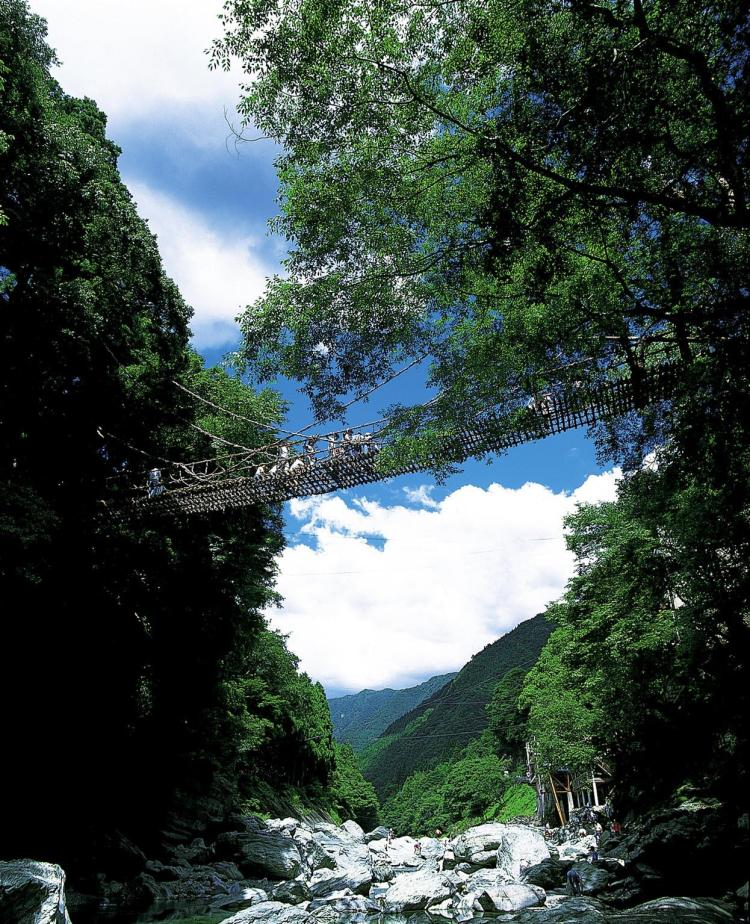 Kazura Bridge surrounded by lush green at Iya Valley