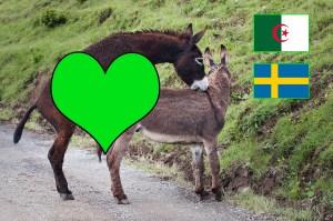 Et les meilleurs au lit sont…. algériens ou suédois! Une étude le prouve
