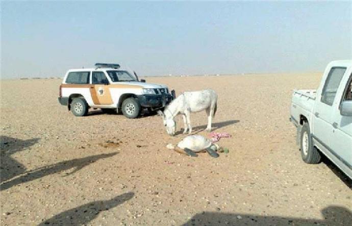 ane_salafiste_saoudien_997617891 Pénurie de femmes en Syrie : des ânes vendus comme esclaves sexuels sur les marchés de Daesh