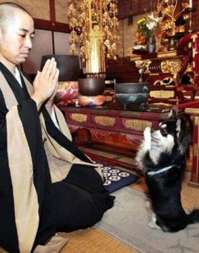 chien-bouddhiste-1 250 moines coréens se font incinérer vivants pour rendre hommage à leur chien décédé qui incarnait le fondateur du temple