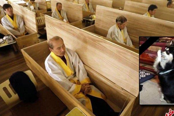 250 moines coréens se font incinérer vivants pour rendre hommage à leur chien décédé qui incarnait le fondateur du temple