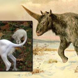 USA : des scientifiques ont réussi à recréer un poulain-licorne avec de l'ADN fossilisé
