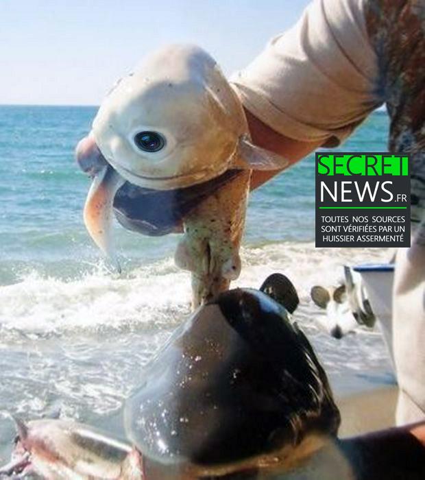 cyborg-requin-espion-camera-secretnews-3-1 Encore un étrange requin-cyborg muni d'une caméra-espion pêché au Sri-Lanka