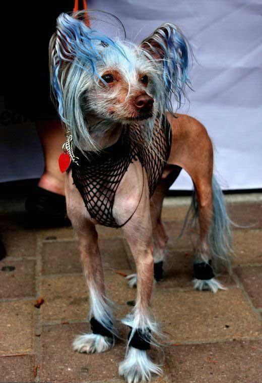 chien-prostitution-danemark Zoophilie au Danemark : de plus en plus de chiens se prostituent sur les trottoirs de Copenhague